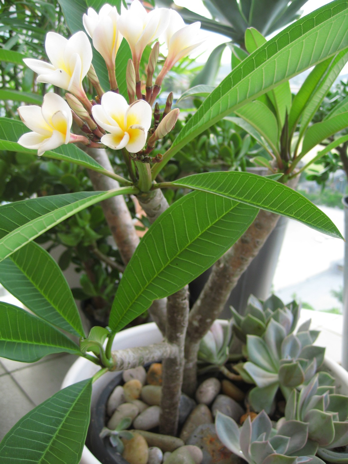 Agro Services Pvt Ltd 187 Frangipani